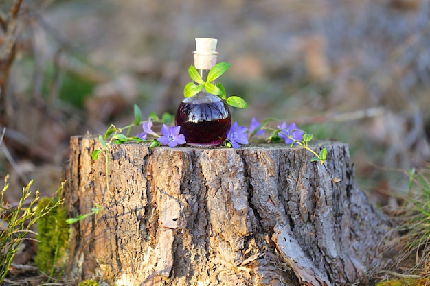 Magic potion. tincture of wild herbs