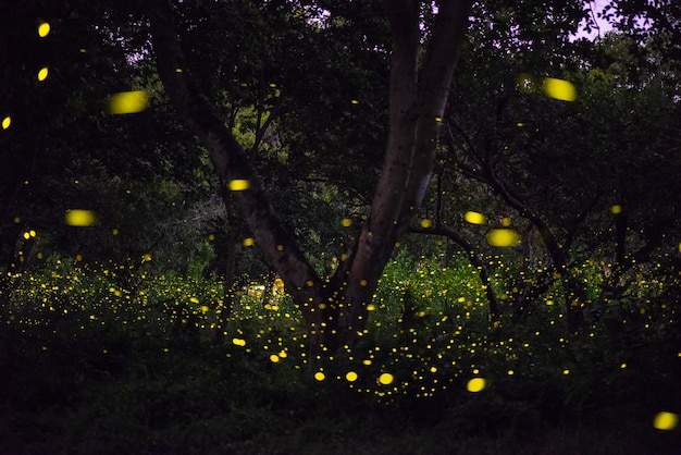 Magical image of firefly flying in the night forest in thailand
