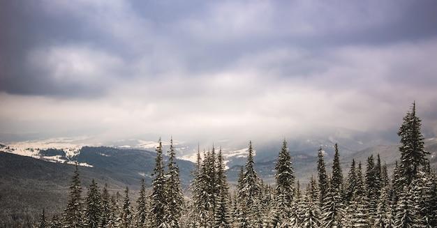 Волшебный пейзаж с елями и холмами и хмурым небом холодным зимним вечером