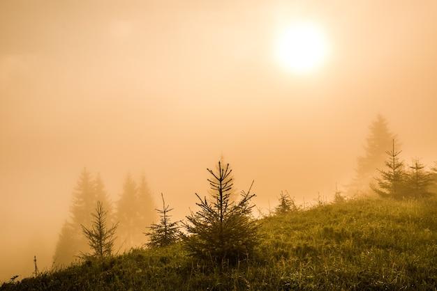 짙은 안개에 덮인 어린 전나무의 마법 같은 매혹적인 풍경