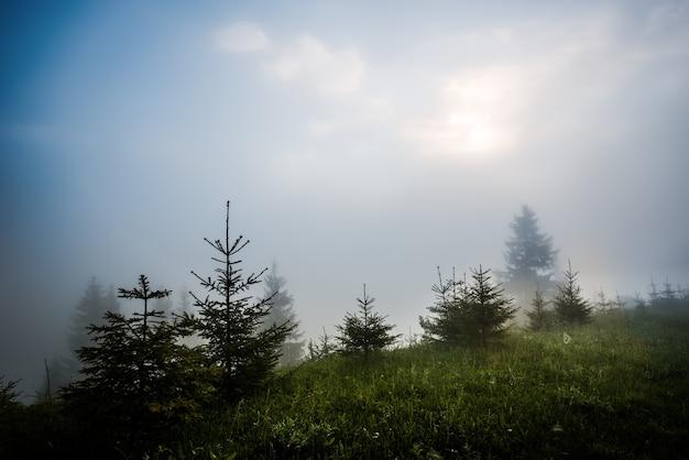 Волшебный завораживающий пейзаж молодых елей, растущих на зеленых холмах среди густого тумана