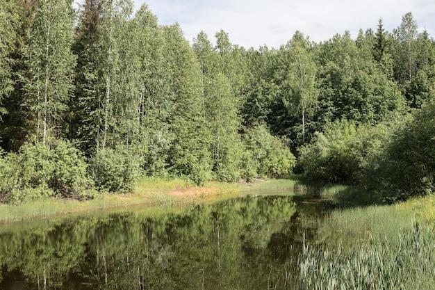 마법의 여름 늪 깊은 숲