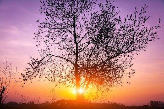 木と魔法の日の出