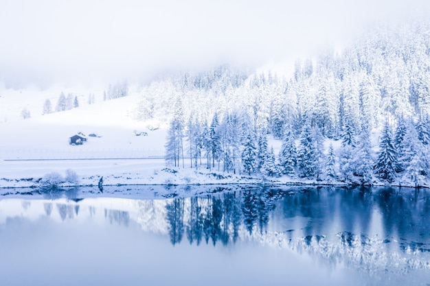 Magical switzerland winter lake in the center of the alps surrounded by the forest covered by snow