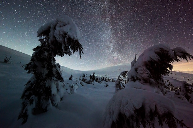 Magical view of snowy fir trees growing on a hillside in the mountains on a winter starry night