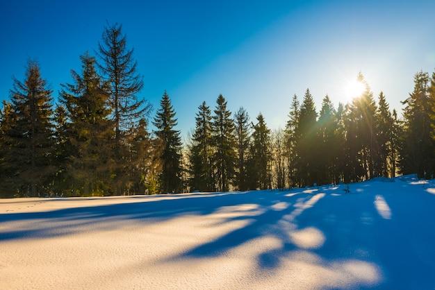 斜面に生えている針葉樹林の魔法の冬のパノラマ