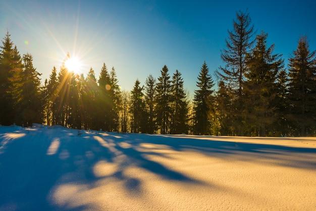 침엽수 숲의 마법의 겨울 파노라마