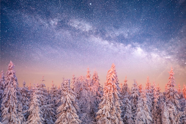 Magical winter snow covered tree. winter landscape.