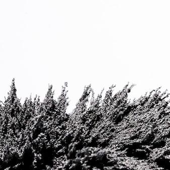 Магнитная металлическая стружка на белом фоне