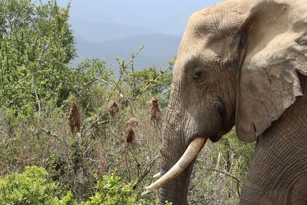 정글의 수풀과 식물 근처의 장엄한 진흙 투성이 코끼리