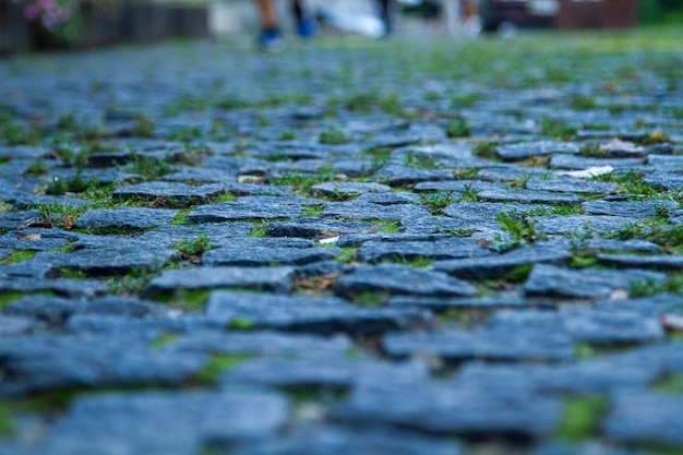 A magnificent photo of a real granite paving stone with green grass between the cobblestones.