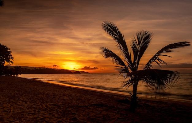 Великолепный вид на пляж с деревьями и море во время заката.