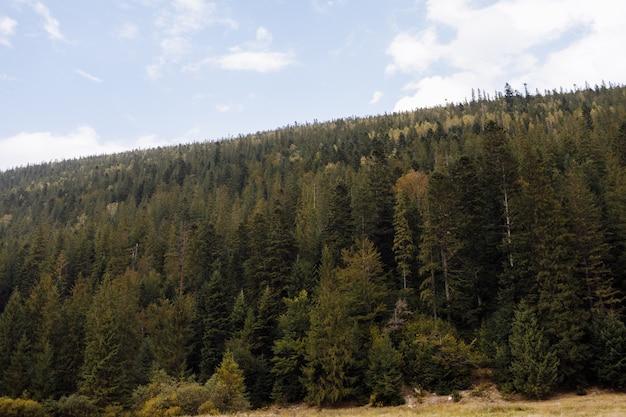Великолепный вид на хвойный лес на могучие карпатские горы и красивый фон облачного неба. красота дикой девственной украинской природы, европы. популярная туристическая достопримечательность.