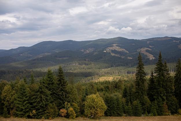 거대한 카르 파티 아 산맥과 아름다운 흐린 하늘의 침엽수 림을 웅장하게 볼 수 있습니다.
