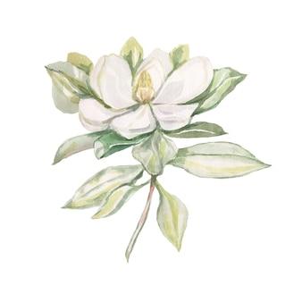 목련 꽃 꽃 밝은 이국적인 수채화 손으로 그린 인쇄 세트 자연 꽃 가지와 잎 식물 식물학