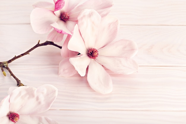 Magnolia flower on white wooden background. copy space