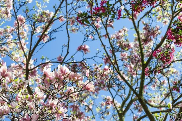 푸른 하늘에 대 한 목련 나무 가지
