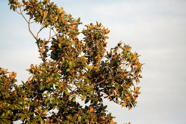 일몰 시간에 하늘 아래 목련 나무