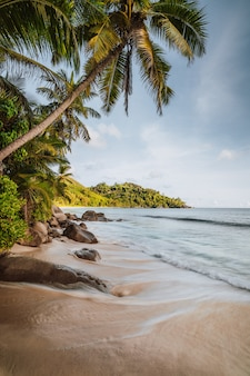 マヘ島、セイシェル。美しいアンスインテンダンス熱帯のビーチでの休日の職業。椰子の木と海の波が岸に向かって転がっています。