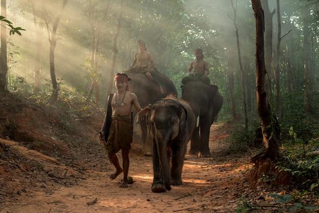 タイ、スリン県、チャン村の象使い。