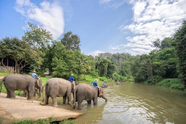 Мауаш ванна и очистить слонов в реке.