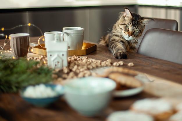 メインクーンの猫は、クリスマスの装飾の隣のテーブルに座っています。