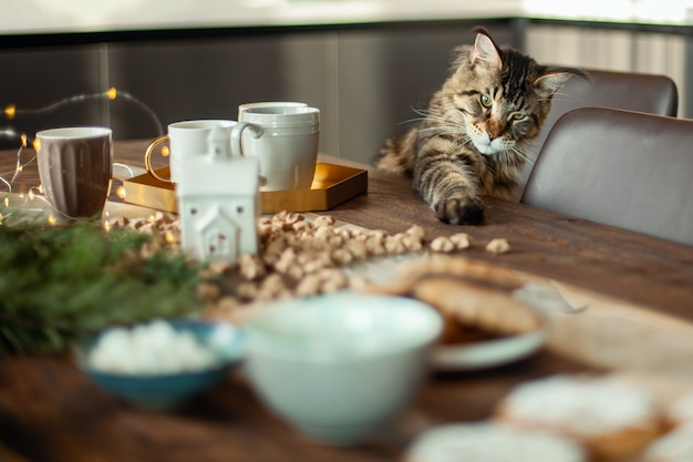 Maine coon cat sits at the table next to the christmas decor.