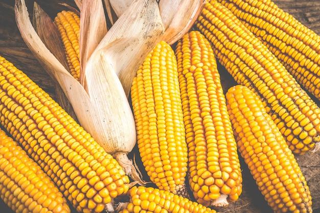 Maize corn harvest