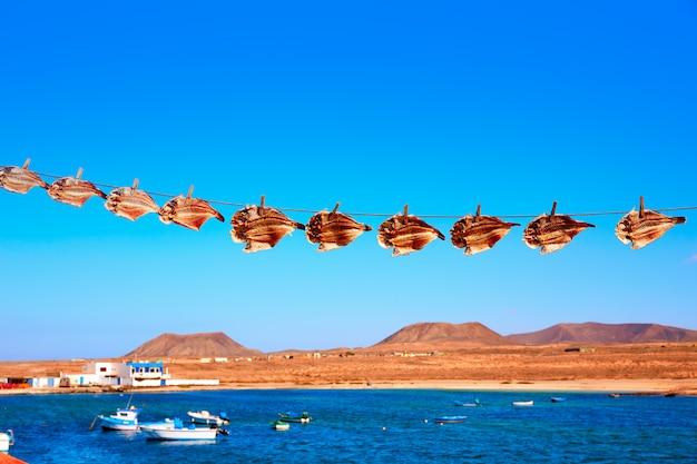 Majanicho干しオウムの魚ビエハのフェルテベントゥラ島