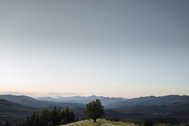 山の谷で日当たりの良い梁と丘の斜面に雄大な一人でブナの木。劇的なカラフルな朝のシーン。赤と黄色の紅葉。カルパティア山脈、ウクライナ、ヨーロッパ。美の世界。