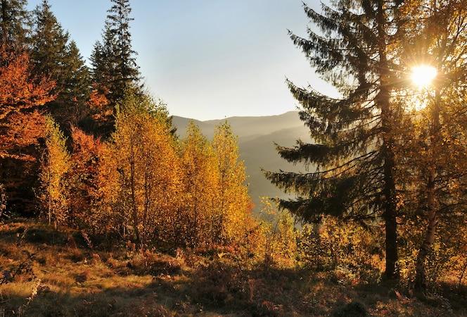 Величественный красочный осенний пейзаж с утренним солнцем в горах.