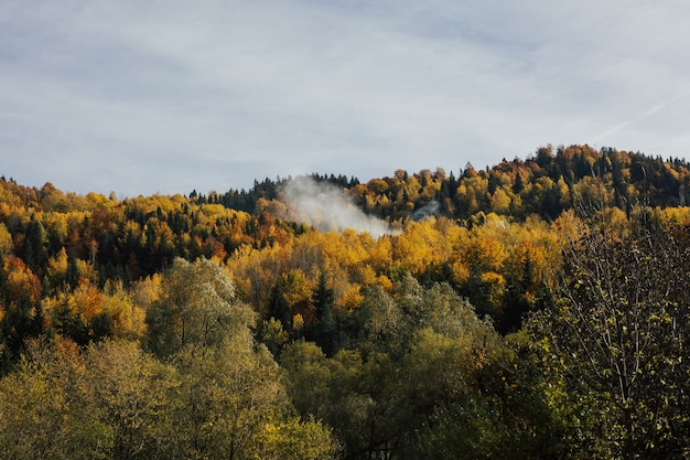 Majestic landscape with autumn trees in forest. autumn landscape with colourful forest.
