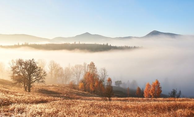 霧の森の秋の木々と雄大な風景。カルパティア、ウクライナ、ヨーロッパ。美容の世界。