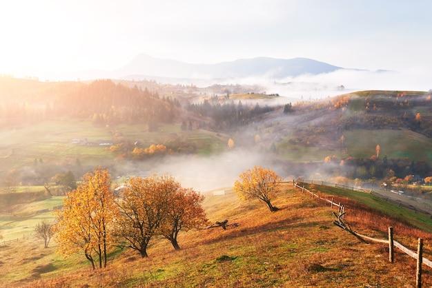 Величественный пейзаж с осенними деревьями в туманном лесу. карпаты, украина, европа. мир красоты.