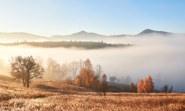 Majestic landscape with autumn trees in misty forest. carpathian, ukraine, europe. beauty world.