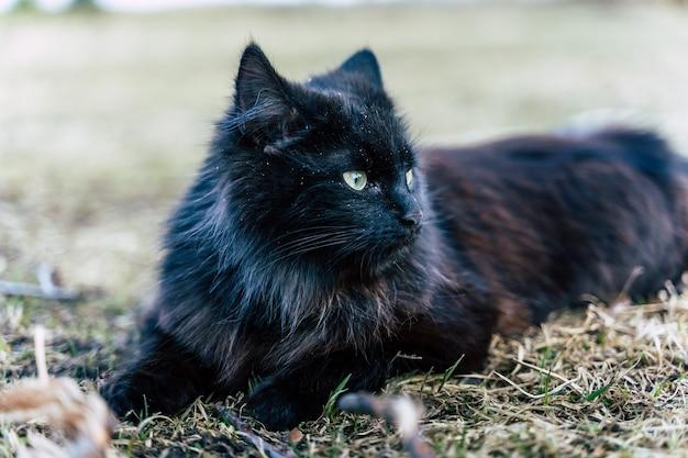 草の上に横たわっている雄大な黒猫-コピースペースでクローズアップ