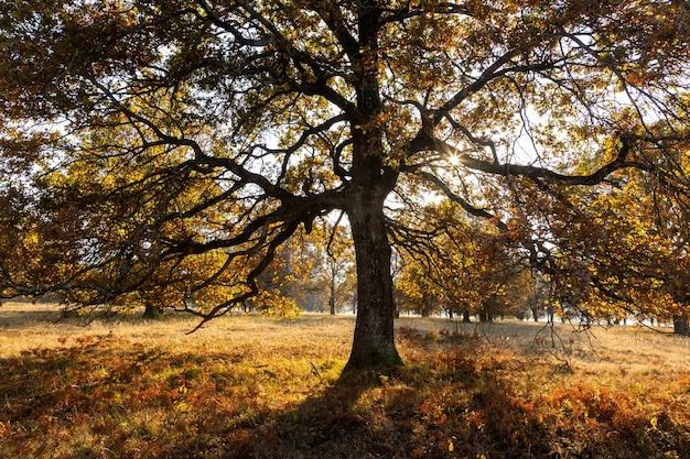 Величественный дуб с большими ветвями, растущими на лугу осенью