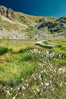 Majestic  of a small mountain lake surrounded by cotton grass in french riviera backcountry