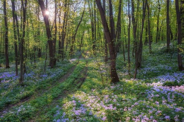 장엄한 봄 풍경, 나무에 야생 꽃, 자연 배경