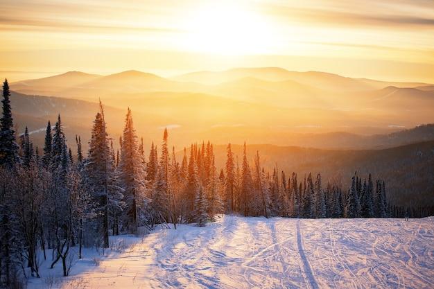 겨울 숲의 장엄한 일몰