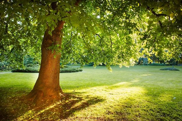 일출 동안 햇빛에 대 한 장엄한 나무