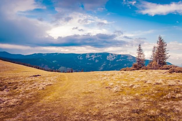 가 산 계곡에서 장엄한 나무입니다. 드라마틱하고 그림 같은 아침 장면. 따뜻한 토닝 효과. carpathians, 우크라이나, 유럽. 푸른 하늘 배경에 아름다움 세계 산 풍경