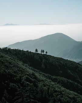 캘리포니아 빅 베어의 산으로 둘러싸인 숲의 장엄한 전망