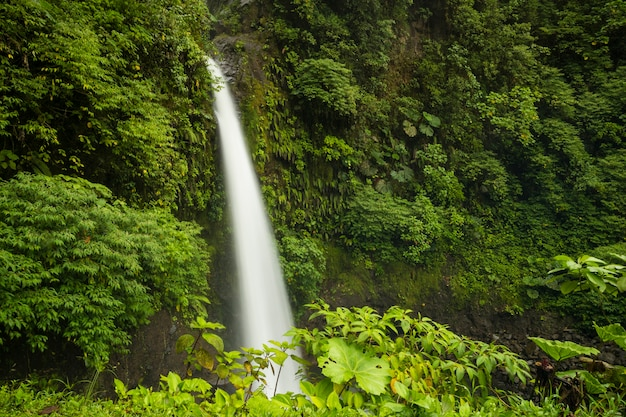 コスタリカの熱帯雨林の雄大な滝