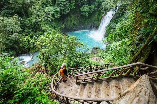 コスタリカの熱帯雨林のジャングルにある雄大な滝。