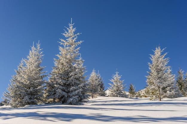 木々の雄大な冬の風景