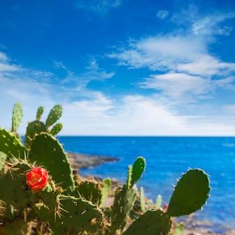 Majorca cala bona beach son servera mallorca