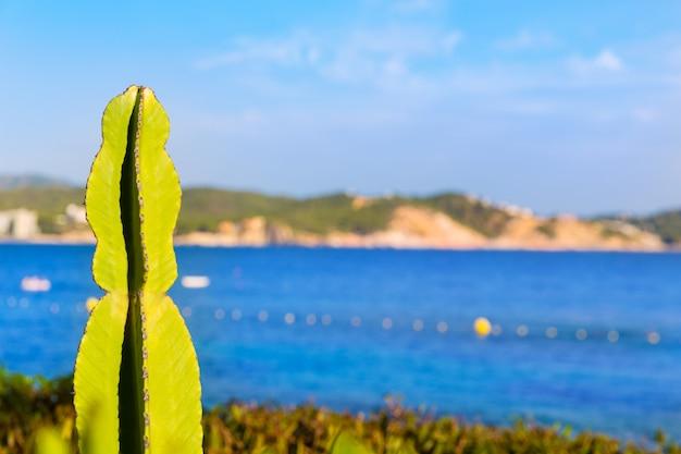Majorca cala fornells beach paguera peguera
