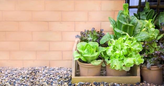 屋外の庭の一角で野菜を作る