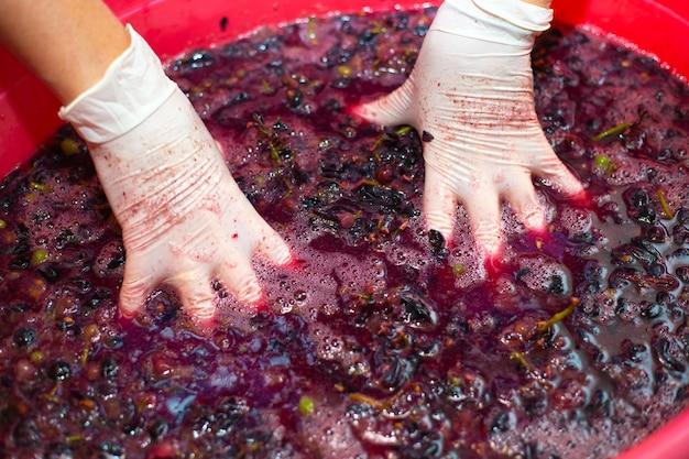 Изготовление вина. руки женщины морщить гроздья винограда в тазе. мякоть сочная ягодная, выборочный фокус.